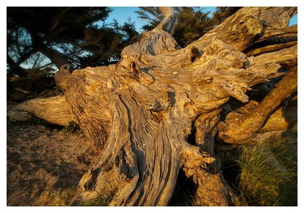 Tree Stump Sunset by happysnapper