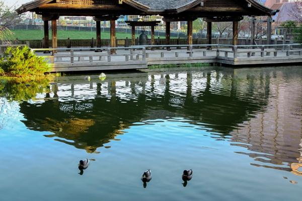 Pavilion reflection by manicam