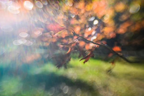 Autumn light by ColleenA