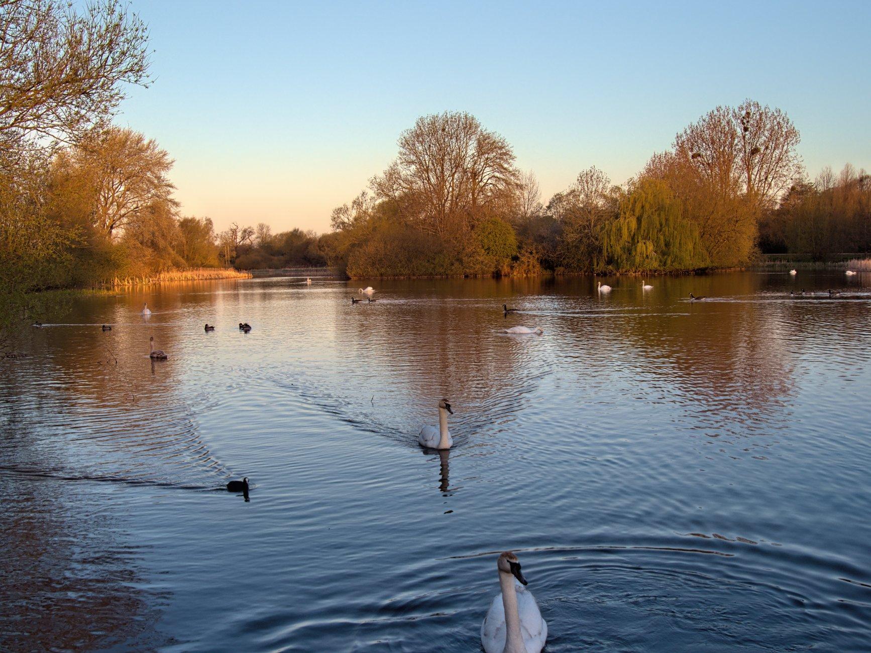 Backwell Lake, N Somerset