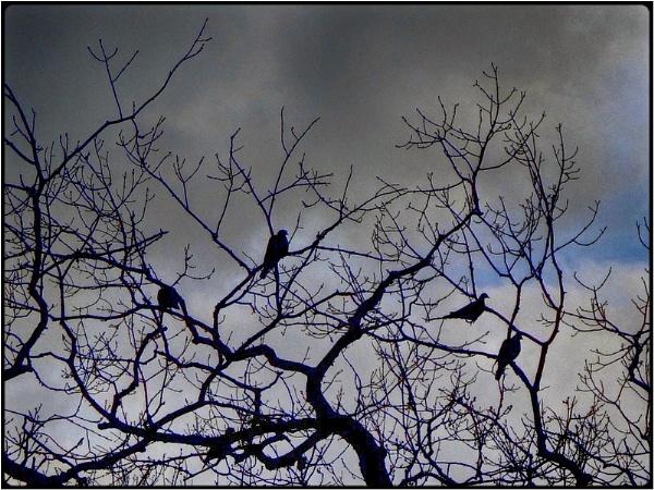 the birds in the tree by FabioKeiner