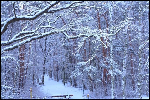 winterwood 2 by FabioKeiner