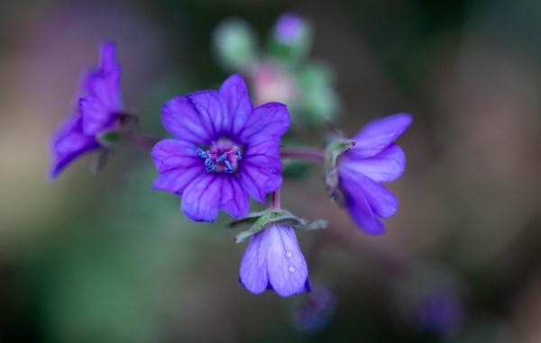 The colour purple by Danny1970