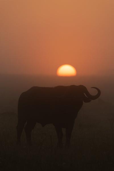 Horns at Dawn by NickDale