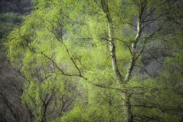 Derbyshire Dales Spring by Legend147