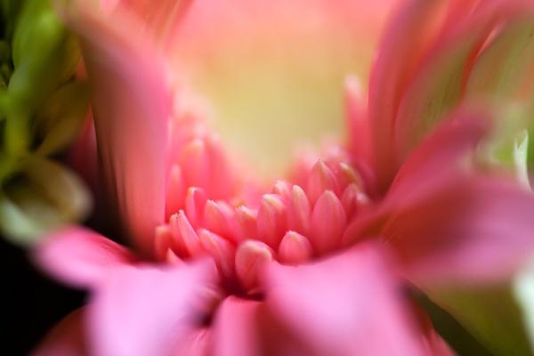 Petals by pixel_Painter
