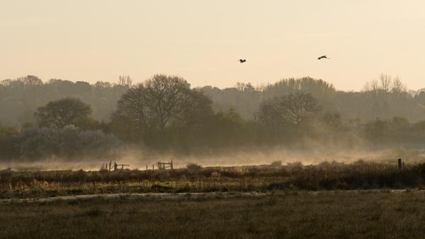 last of the mist by alfpics