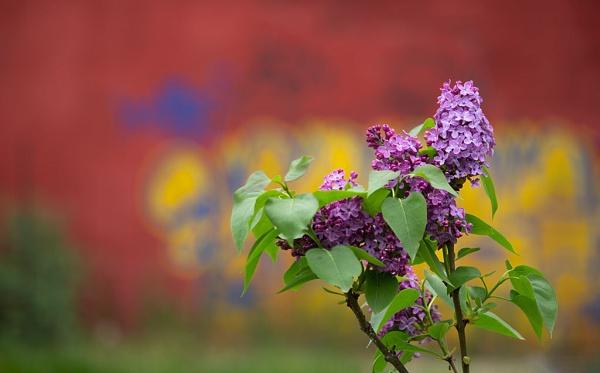 Beauty of spring by LaoCe