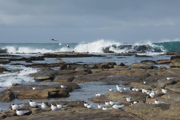 The Catlins coastline - NZ by barryyoungnz