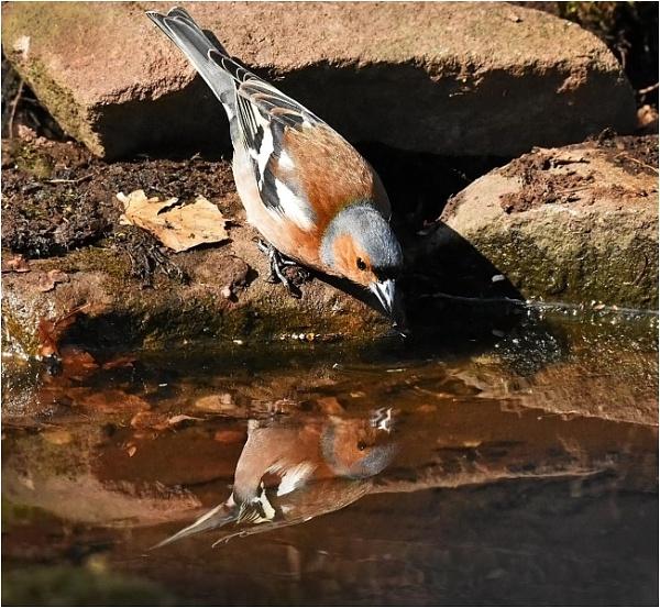 Thirsty by MalcolmM