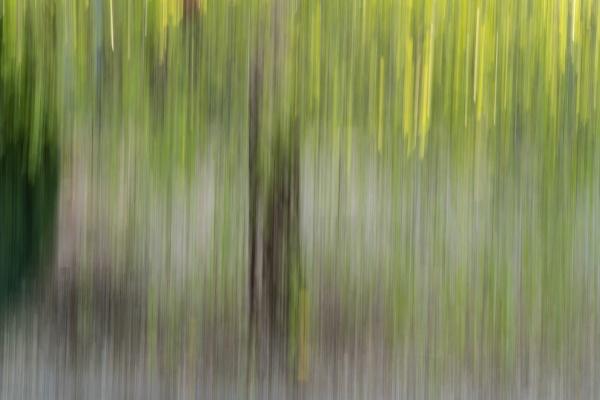 Memories of Green by Silverlake
