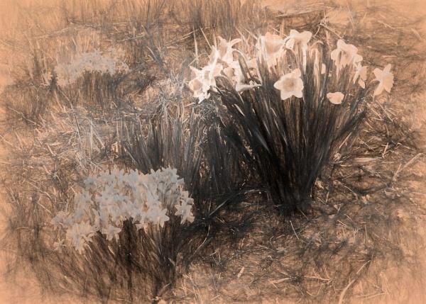 Spring Garden sketch by Joline