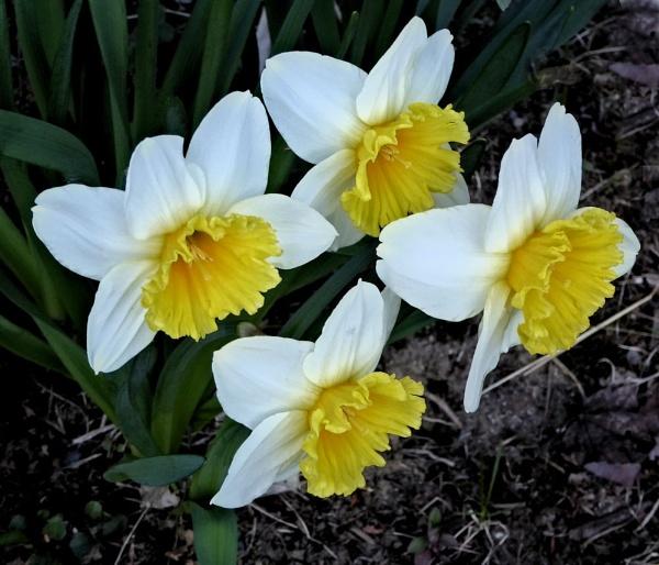 Spring Quartet by Joline