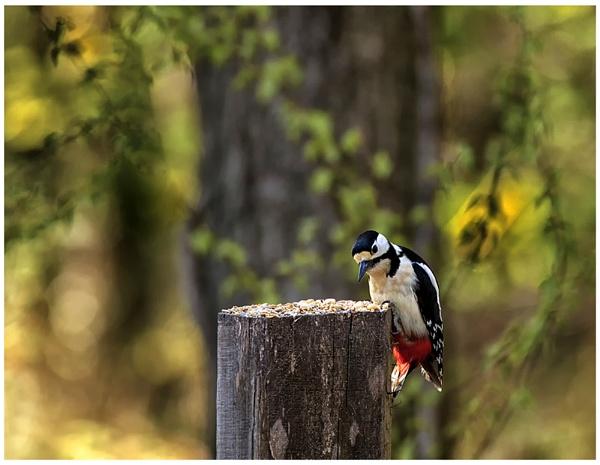 Woody Woodpecker by Buffalo_Tom