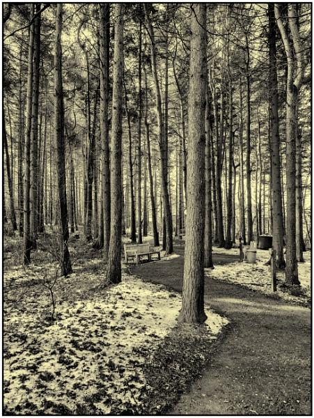 The Elf Walk by woolybill1