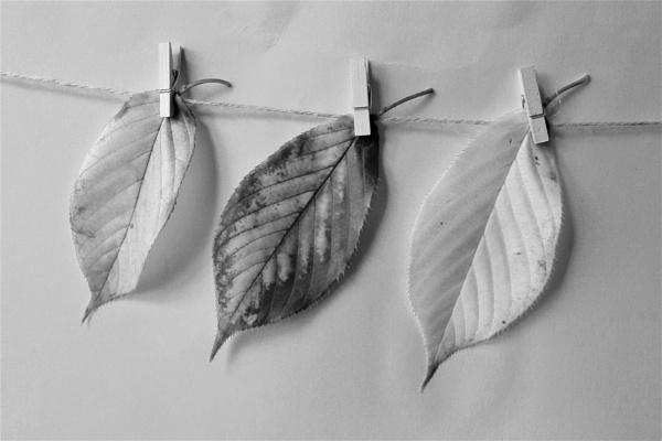 3 leaves by helenlinda