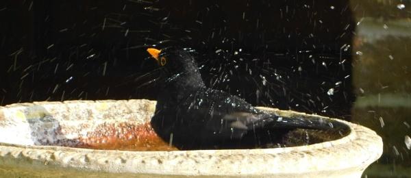 Splashing around by SUE118