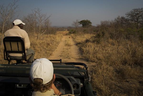 Safari by esoxlucius