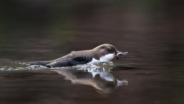 Wading Through by jasonrwl