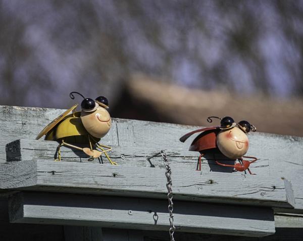 Ladybirds by RLF