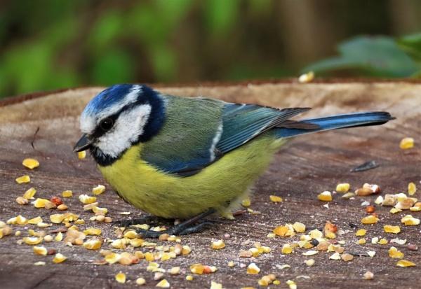 Nut Feast by JanOByrne