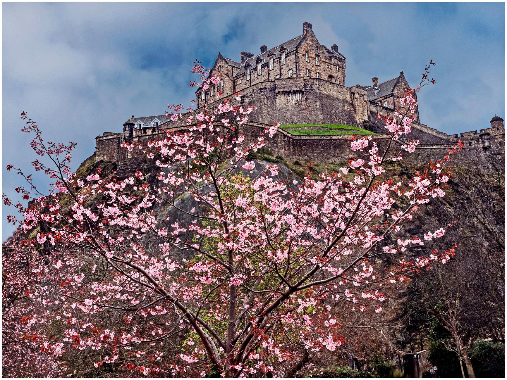 Castle Blossom