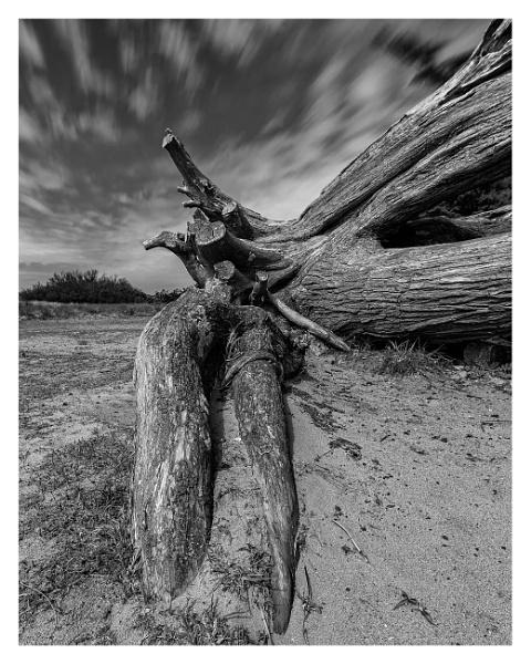 Tree Trunk by happysnapper