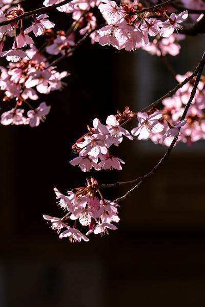 Hello, Happy Spring by manicam