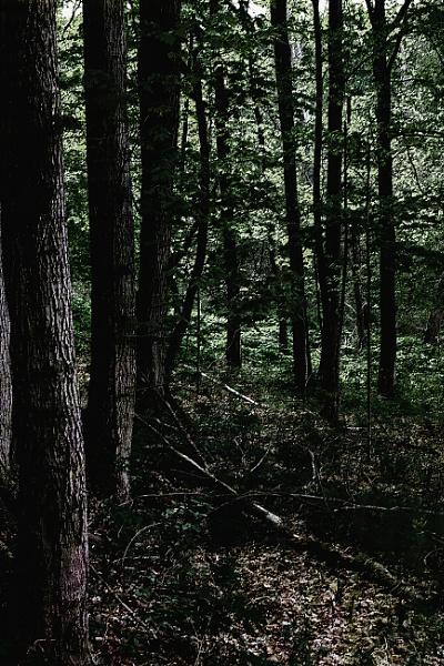 Vertical green by manicam