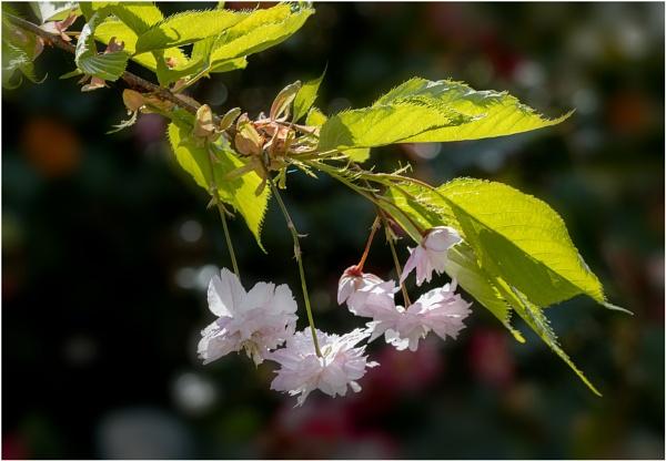 Blossom Time by capto
