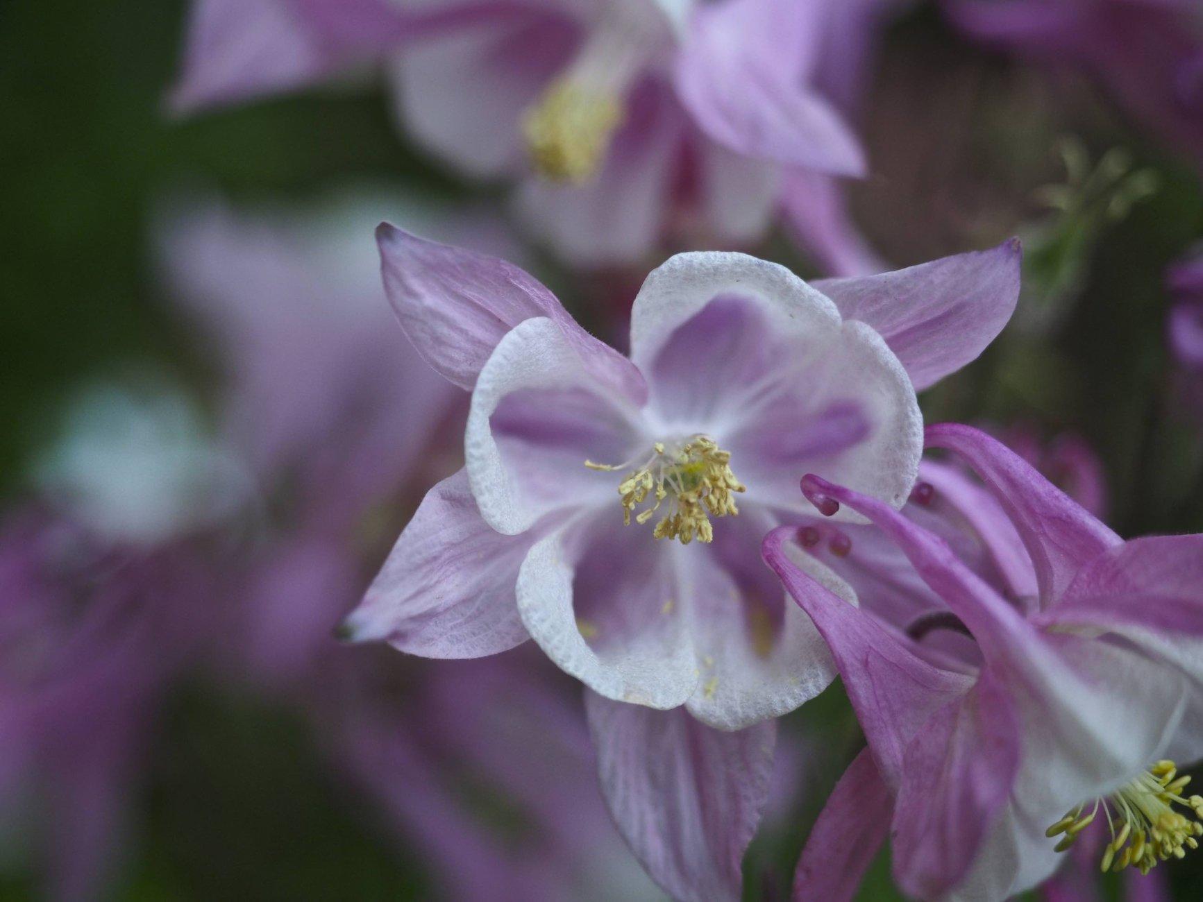 Flowers of Spring #1