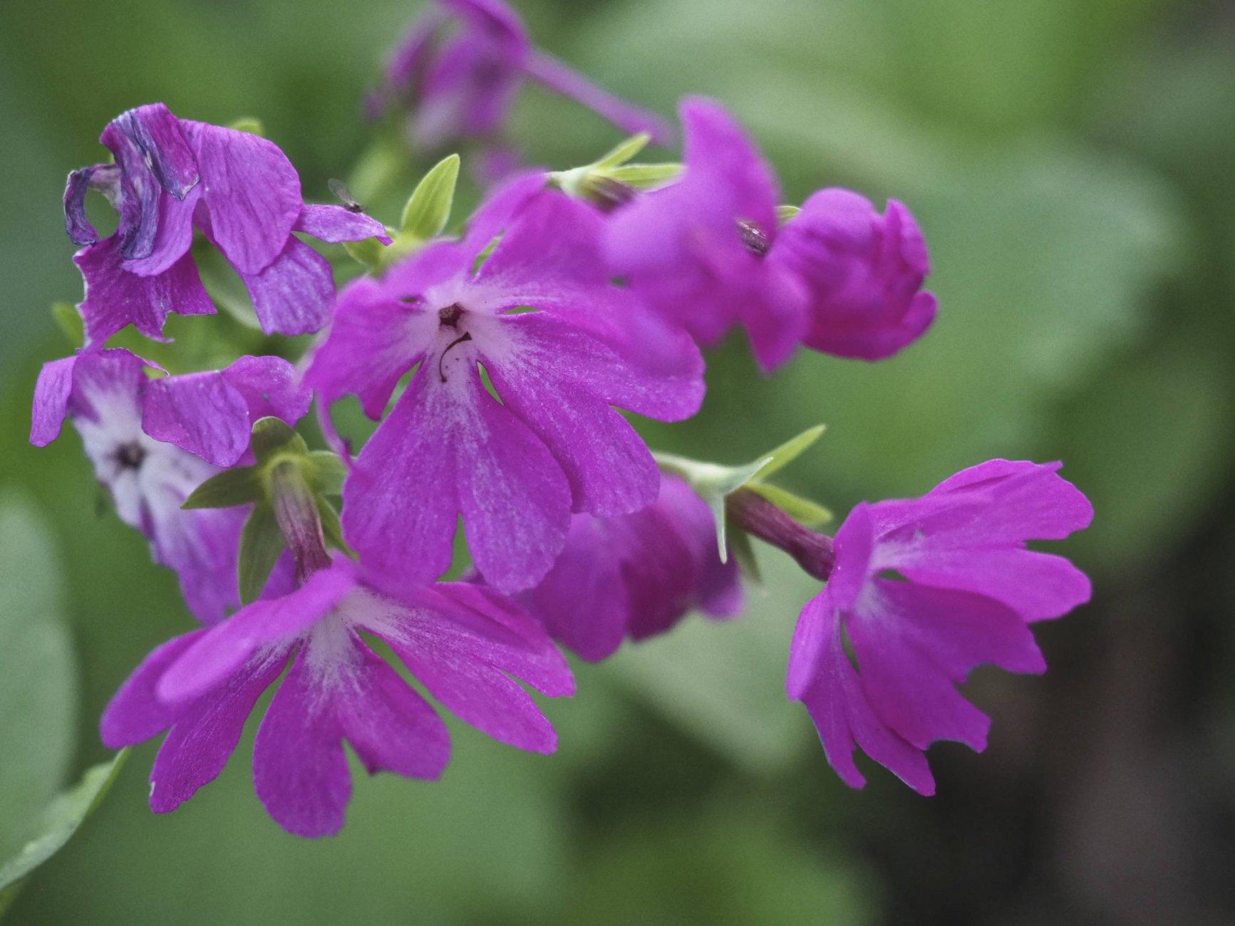 Flowers of Spring #2