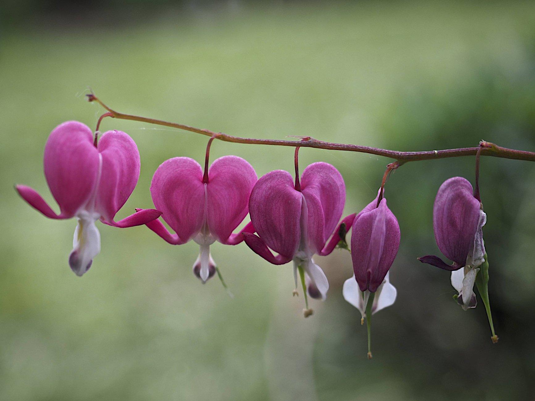 Flowers of Spring #3