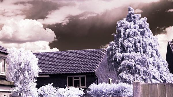In the Back Garden by Nikonuser1
