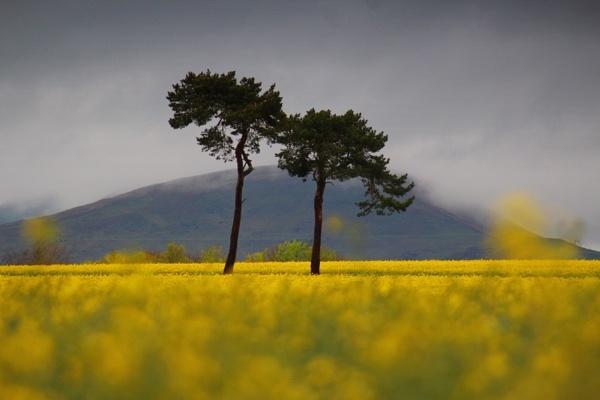 Bonnyrigg fields by Eckyboy