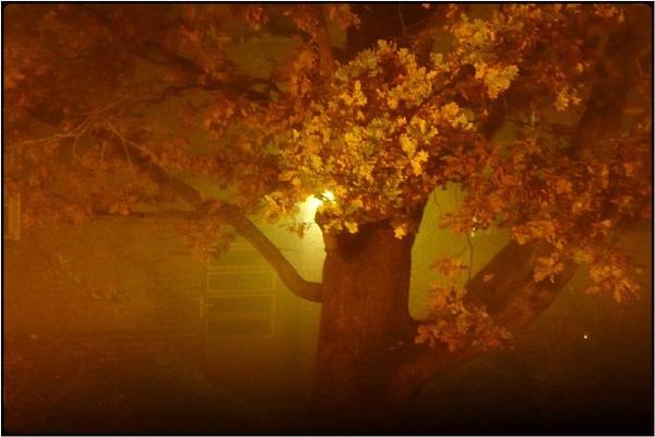 tree in the mist by FabioKeiner