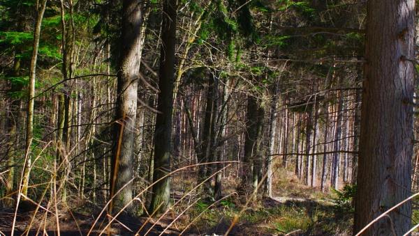 Dense Forest by af1