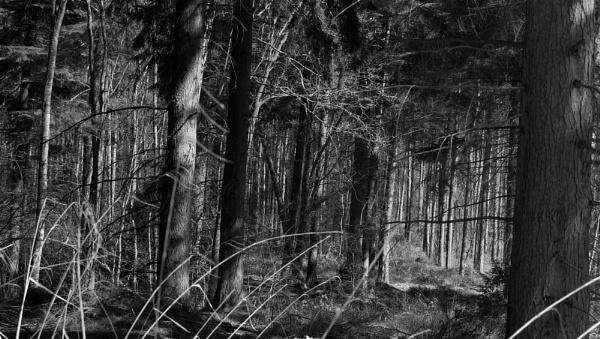 Dense forest 2...b/w conversion by af1
