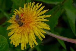 Pollen collector !