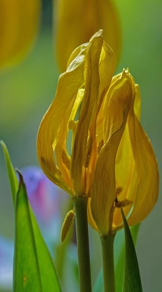 burnished yellow... by estonian