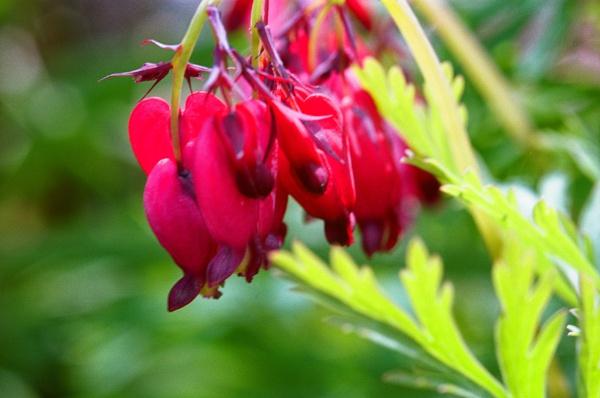 macro flowers by retroman