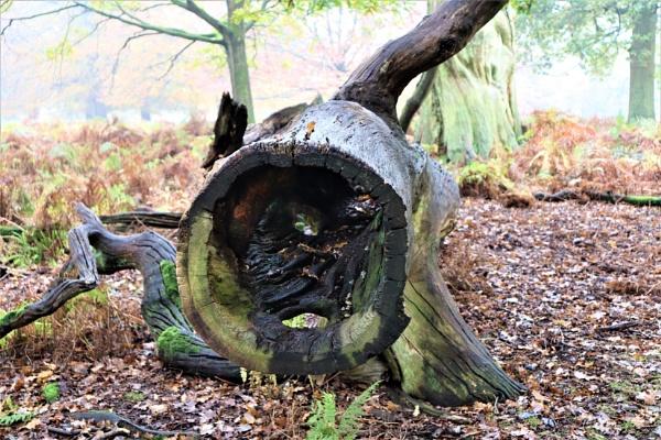 Oak Barrel by olmeister6