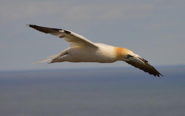 Free as a bird by graceland