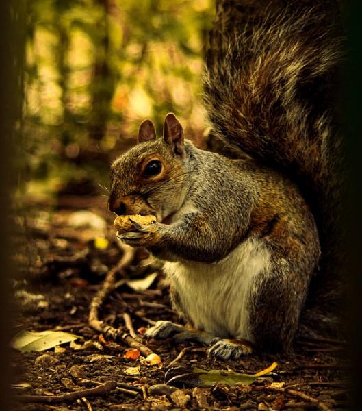 Little squirrel by stebesty