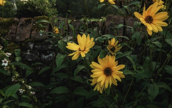 Flowers are love\'s truest language by BillRookery
