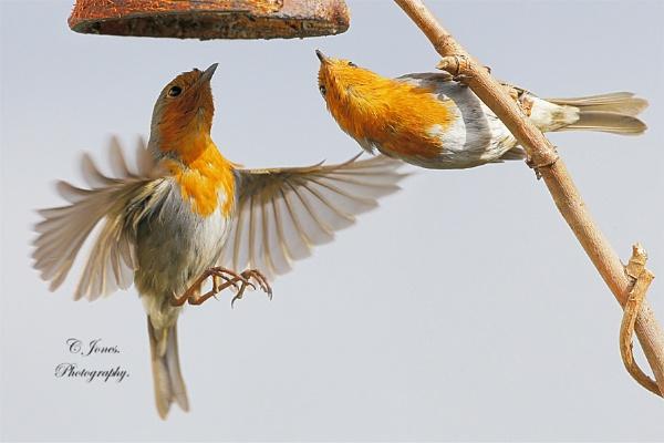 Robin\'s. by cjones