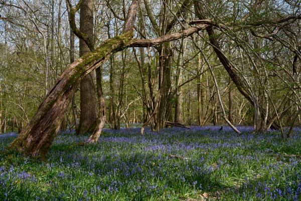 Springtime Woodland Walk by JJGEE