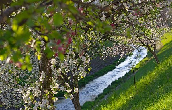 Spring joy by LaoCe