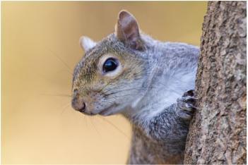 Mr Squirrel!