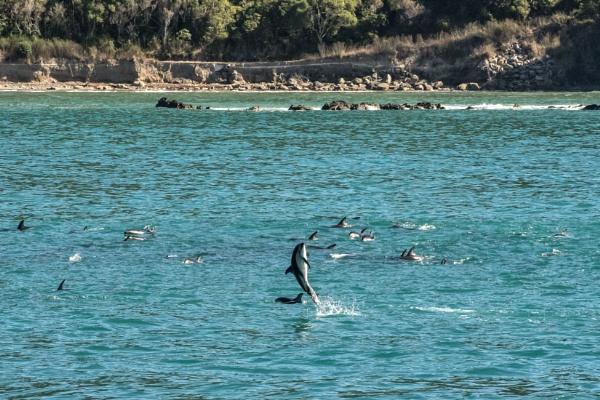 Dolphin Watch - NZ (I) by barryyoungnz